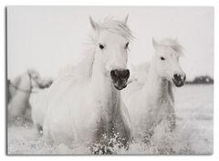 BB Ranch White Horses Wall Canvas , No Color, hi-res